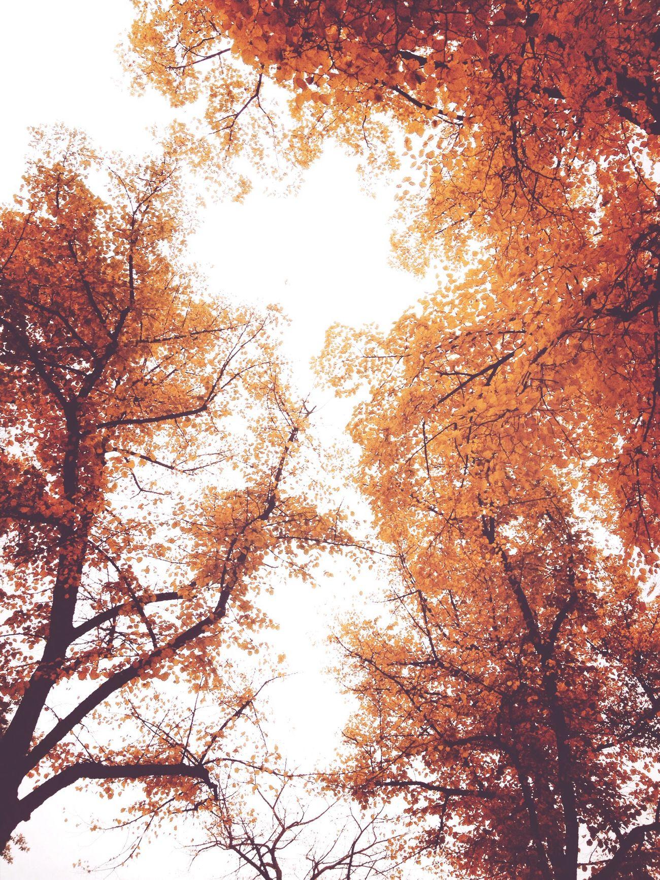 Ach ja! Der Herbst ist da. Lookingup !