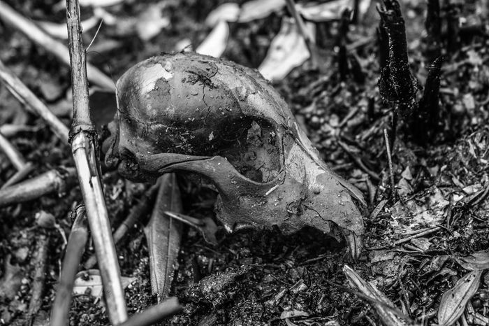 Ashes Ashes To Ashes Close-up Death Fire Ground Leaf Nature Skull Skullporn Skulls♥ Grayscale Gray B&w Photography