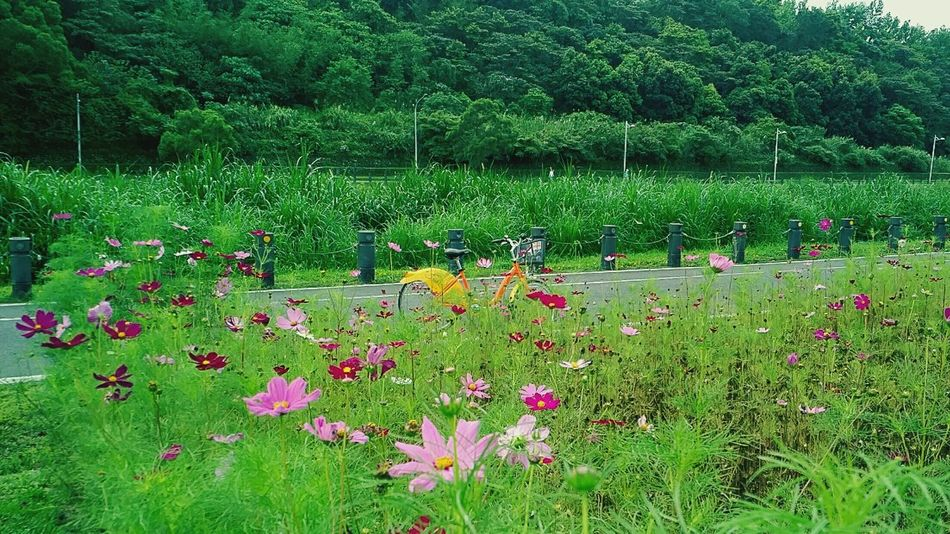 Green Color Grass Nature Flower No People Beauty In Nature Field Ubike NCCU  Blackberrypriv