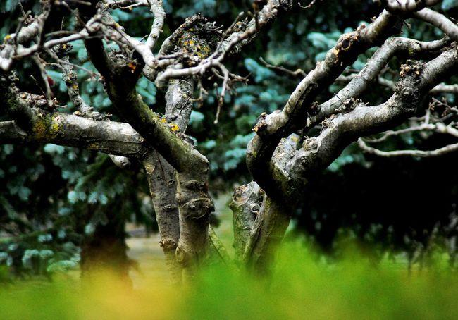 TreePorn Tree