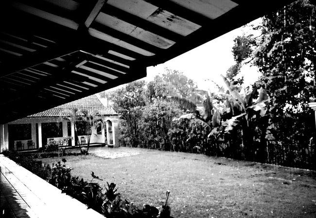 Tree Day Architecture Outdoors No People Nature Photophone  Phonegraphy Octavianuspict Rainy Days EyeEm Best Shots Eyeemindonesia