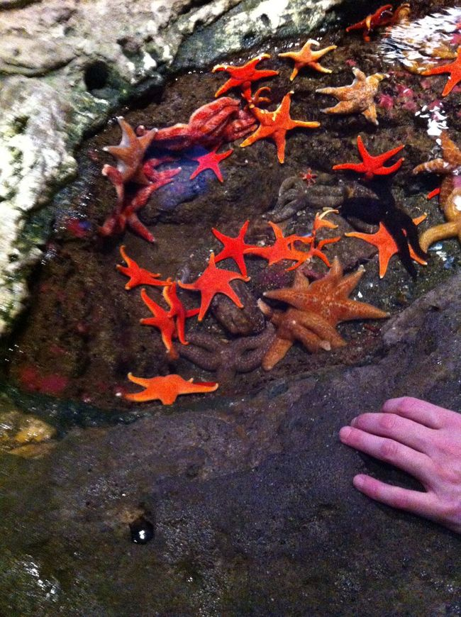 Aquarium Aquarium Life Aquarium Photography Beauty In Nature Day Fragility Nature Outdoors Part Of Person Personal Perspective Red Seattle Aquarium Starfish  Tranquility Vibrant Color