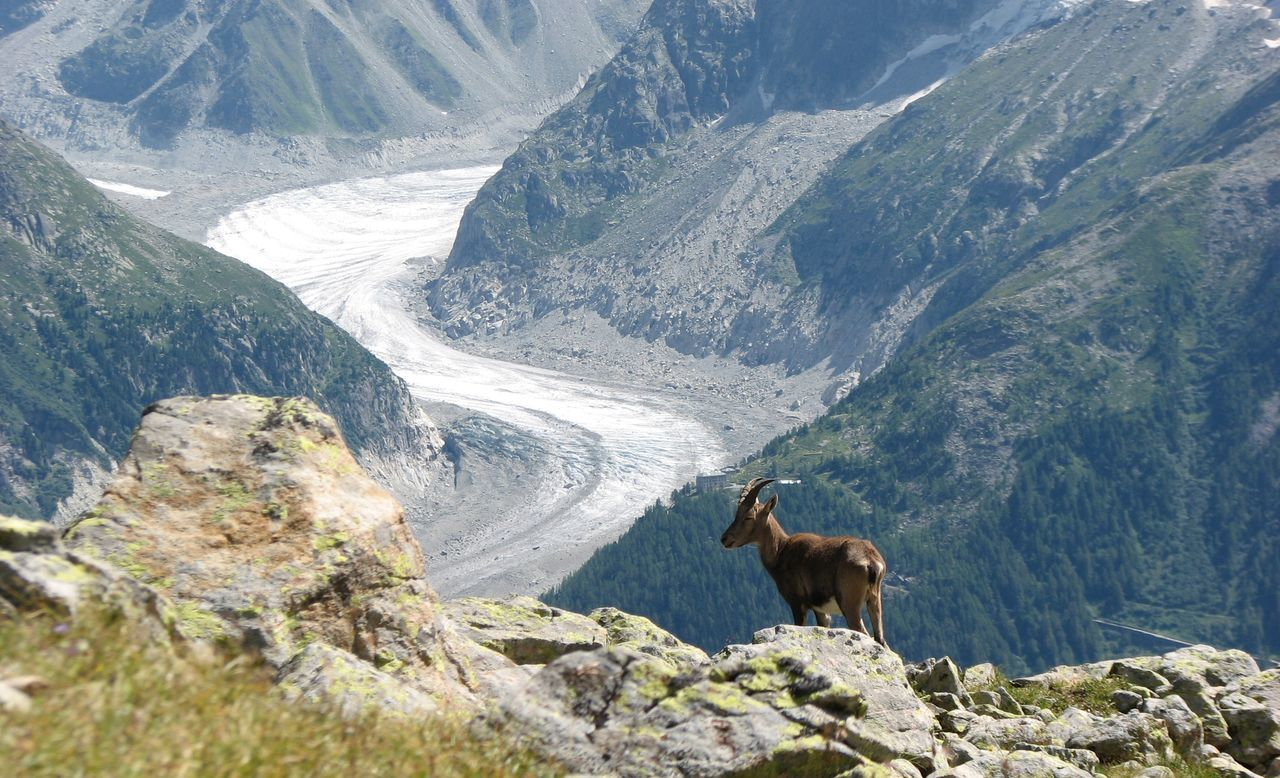 mountain, one animal, animal themes, nature, mammal, mountain range, rock - object, scenics, day, outdoors, beauty in nature, no people, domestic animals