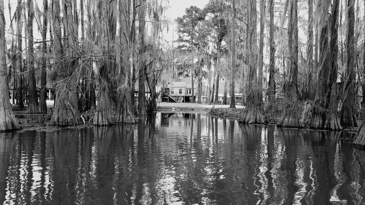 Water Nature Caddo Lake
