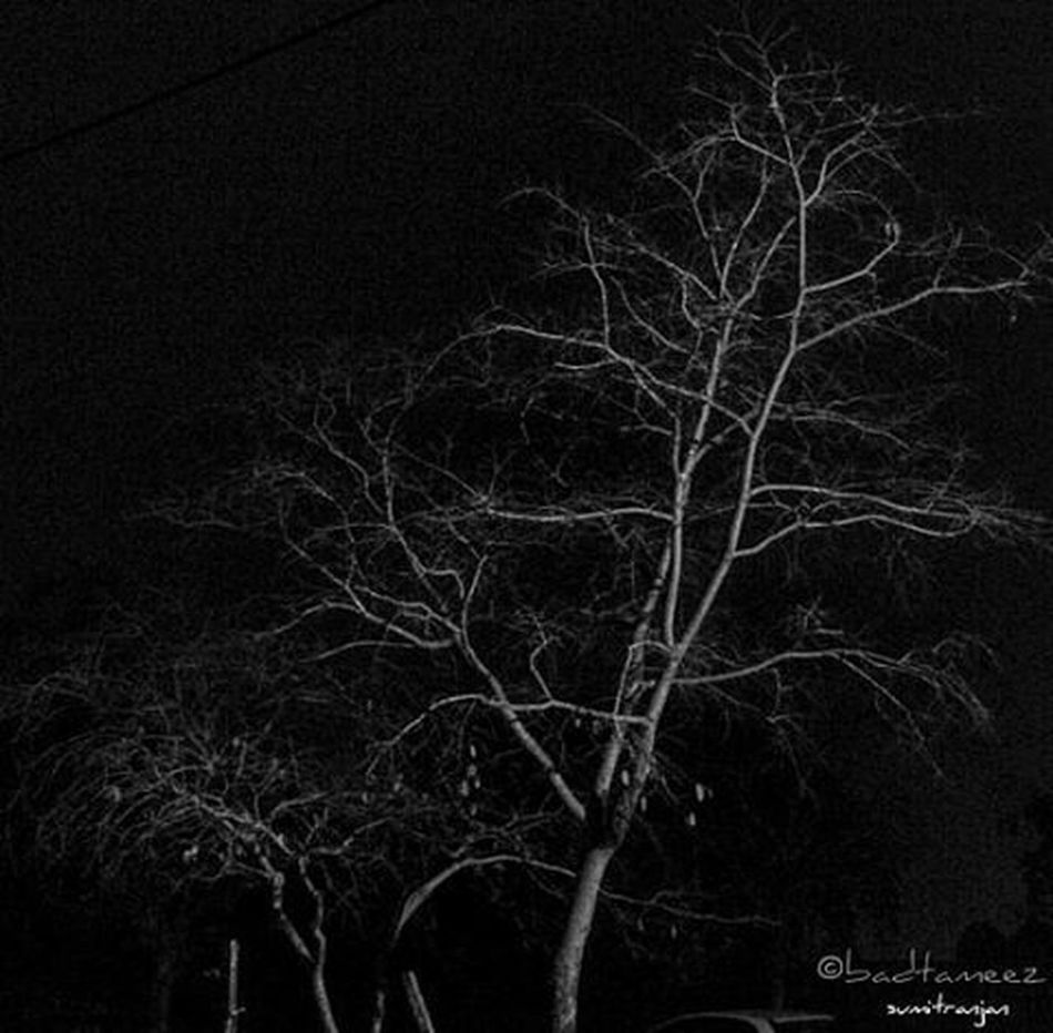 """""""And leaves falls off the tree without regret"""" 😉 Winterfall Wintershred Winternight Deciduoustrees Clickclick Indiapictures Itsphotosensation😎"""
