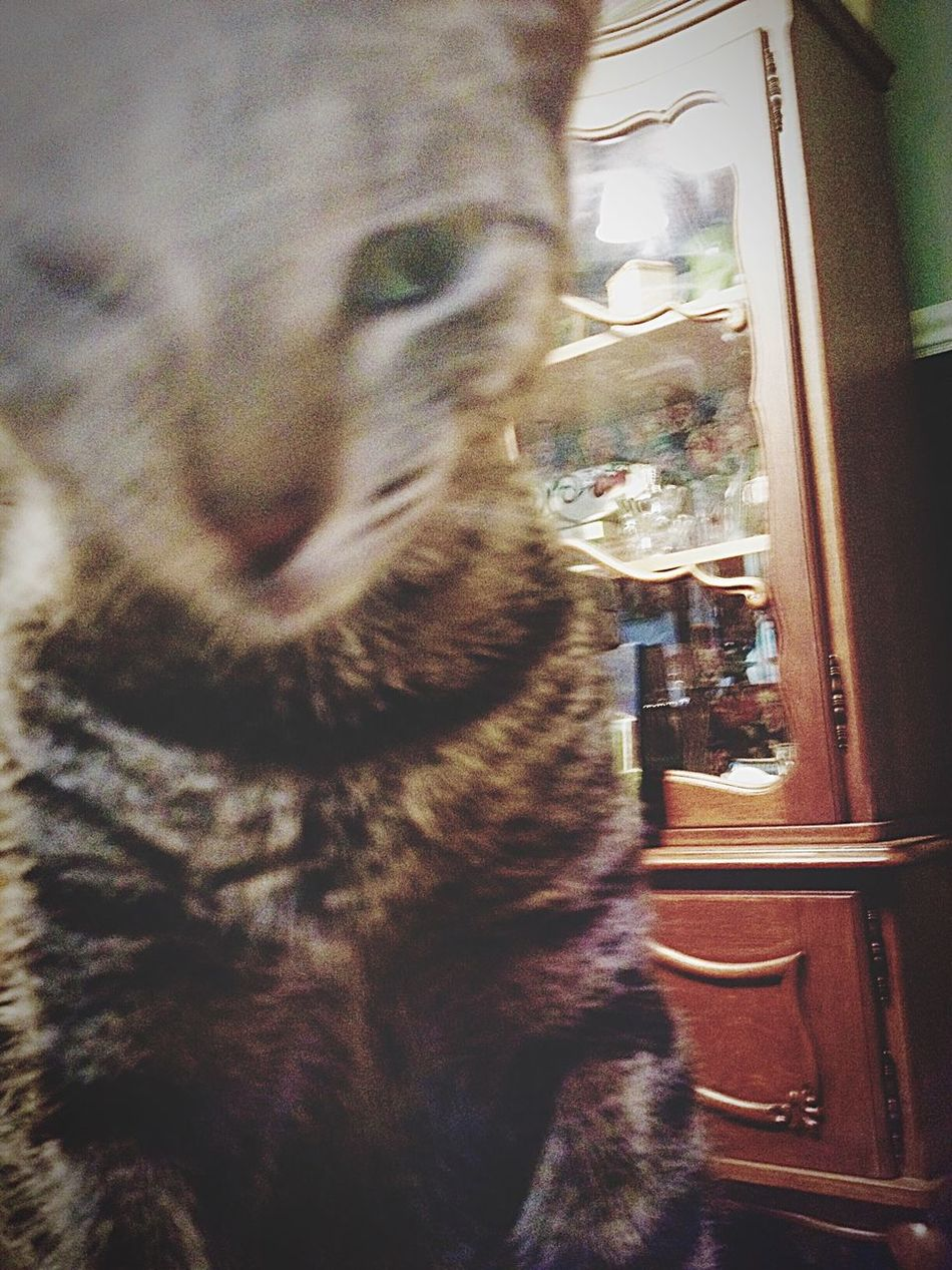 In Motion In Motion Kitty Love Purr Crazy Cat Greenlife Beo Beowolf Rest In Peace Series