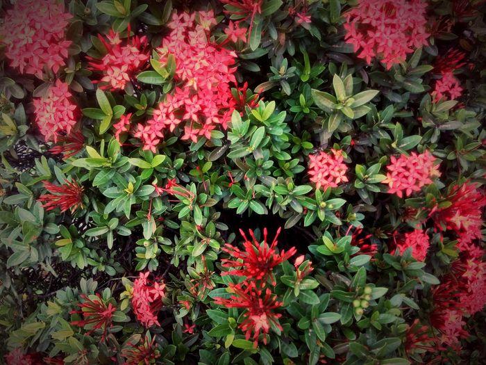 Flowers,Plants & Garden StillLifePhotography Flower Photography Infinixphotography Nature Photography Mother Nature