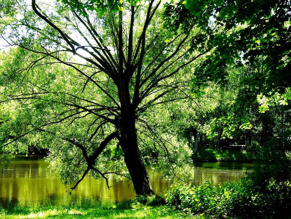 Monster Tree Elagin Island Old Park Magic Place ☀️ Lake Green World Relaxing Sankt-Petersburg Russia