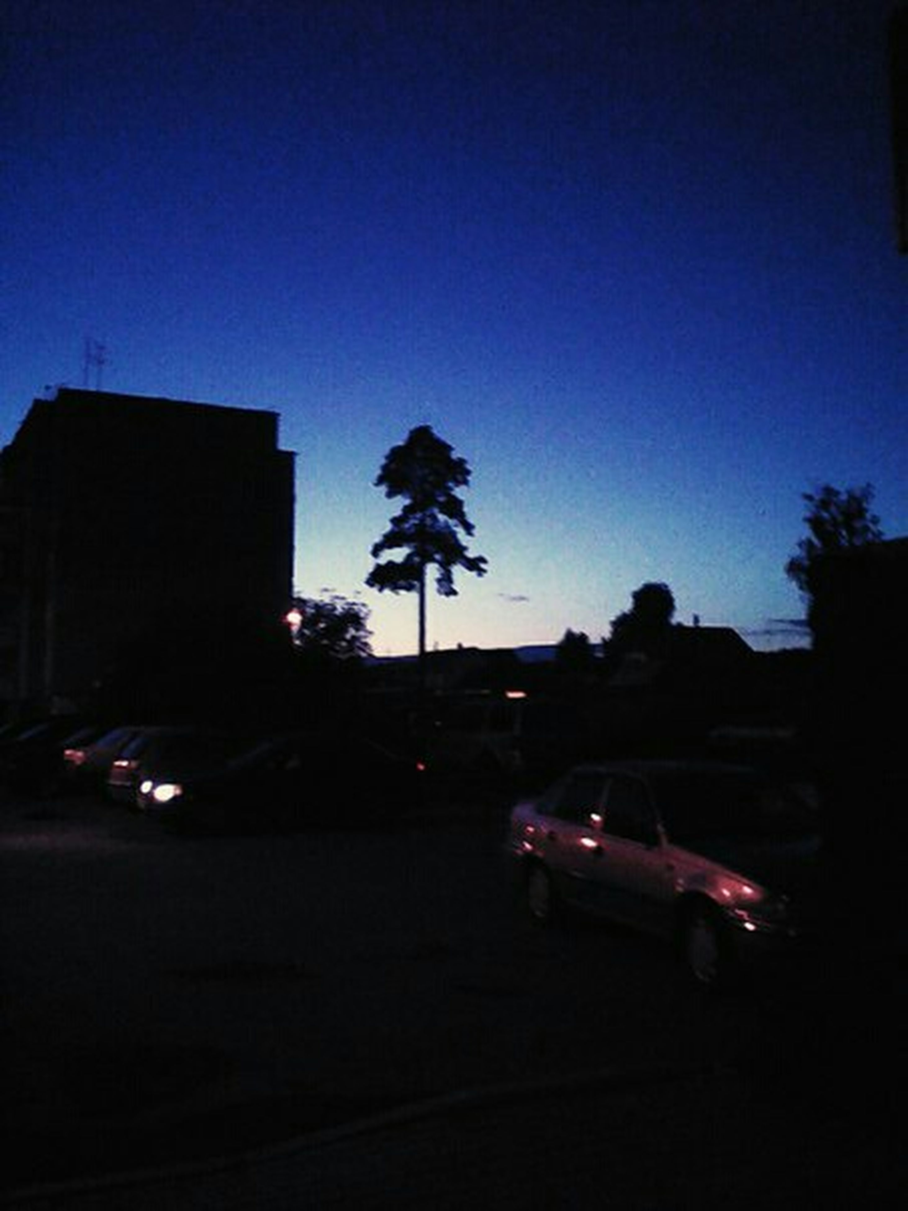 building exterior, tree, silhouette, illuminated, clear sky, car, architecture, built structure, palm tree, transportation, city, land vehicle, street, copy space, street light, road, sky, dusk, night, blue