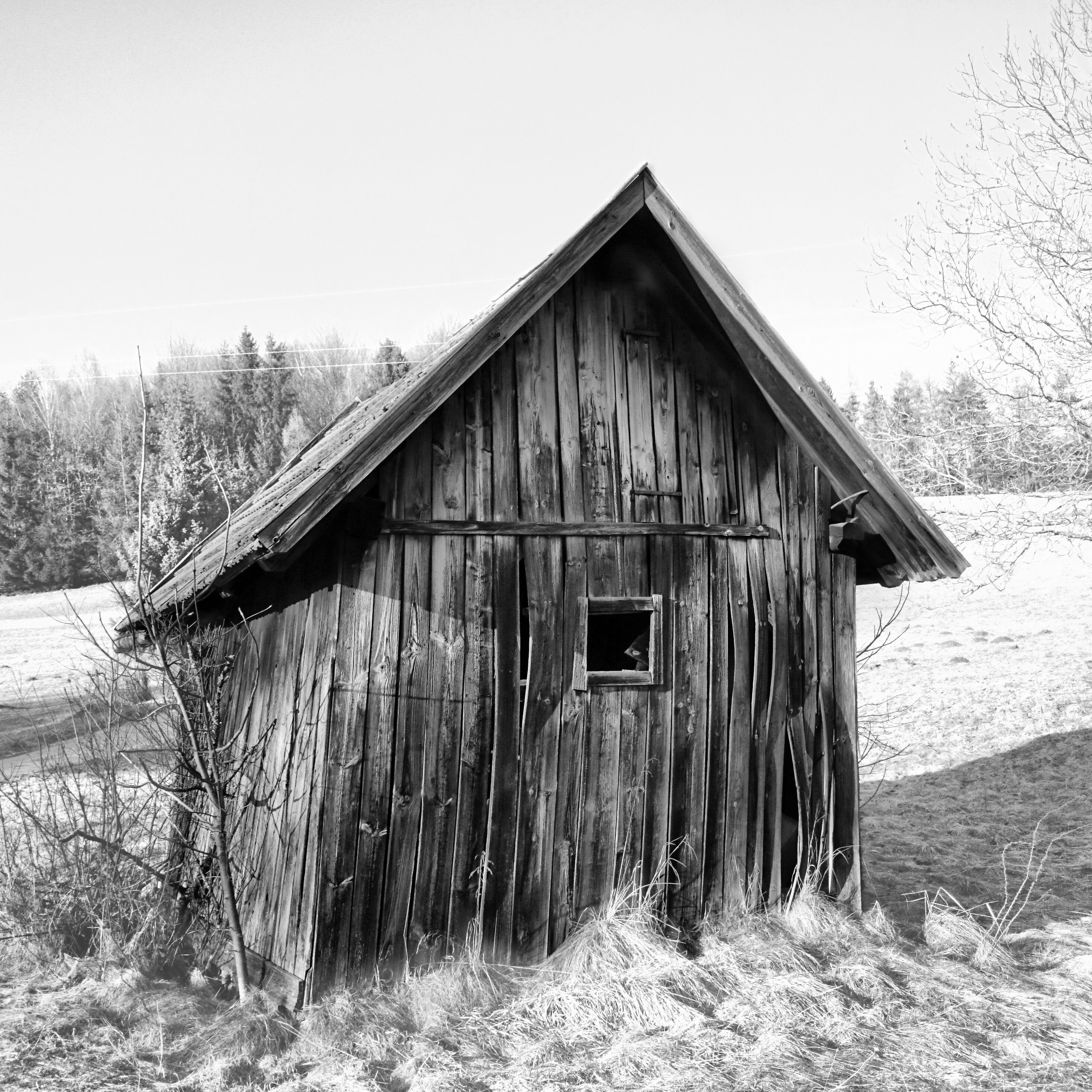 built structure, architecture, abandoned, house, building exterior, obsolete, old, wood - material, damaged, run-down, clear sky, tree, deterioration, field, weathered, hut, sky, day, barn, wood