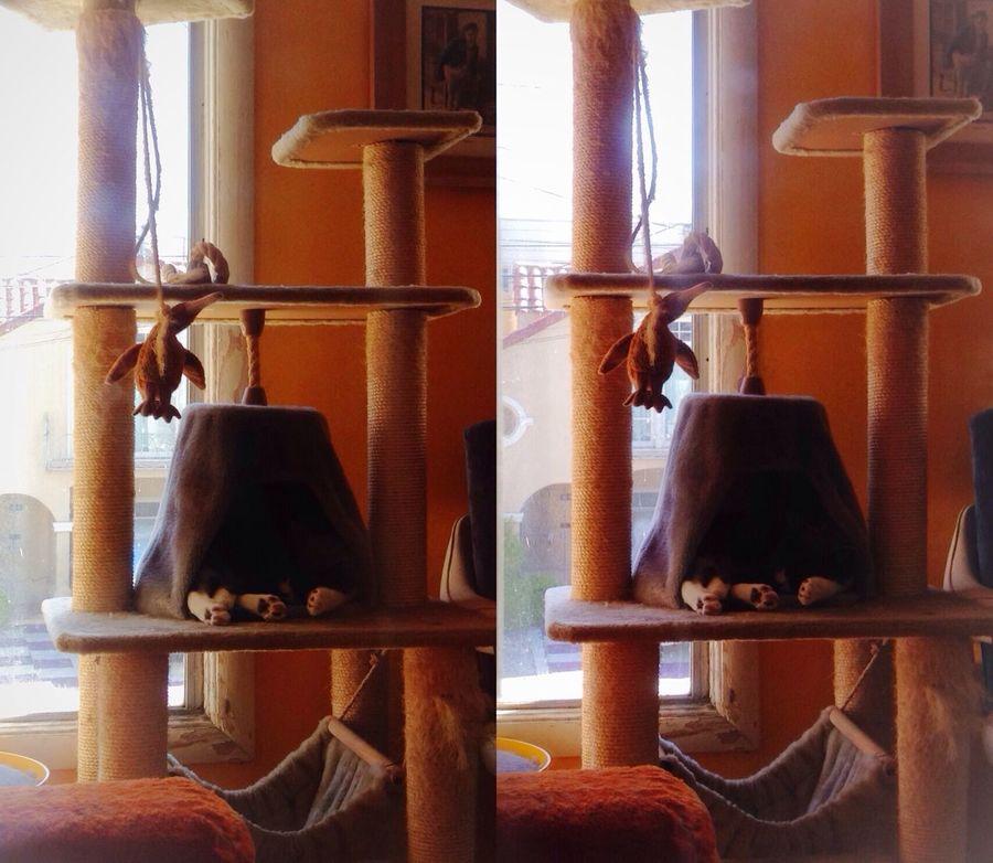 Catnap Cat Tree Stereoptic Poppy Camera