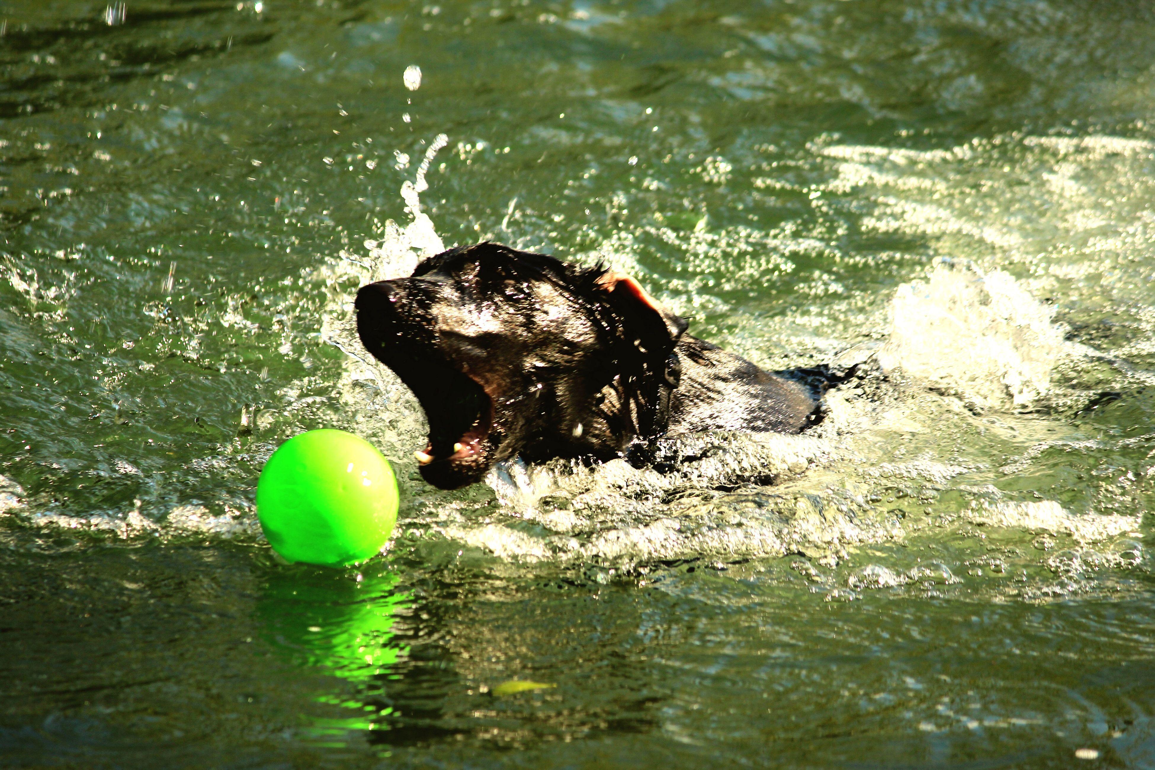 Ice en baignade First Eyeem Photo Black Labrador LabradorRetriever Naturelovers Nature Photography LabradorLove