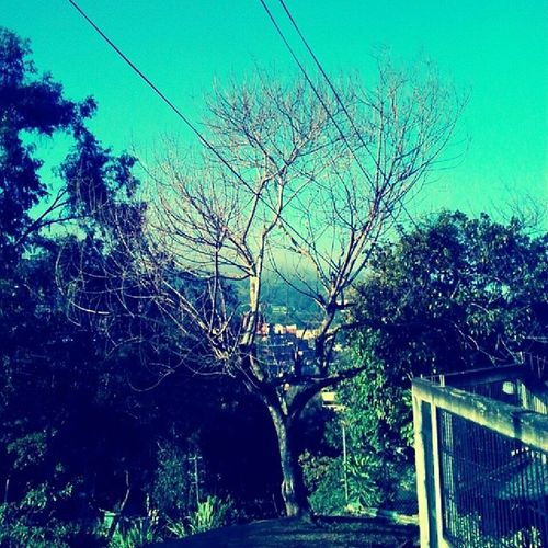 Arboles sin hojas. Caracas Caricuao Arboles