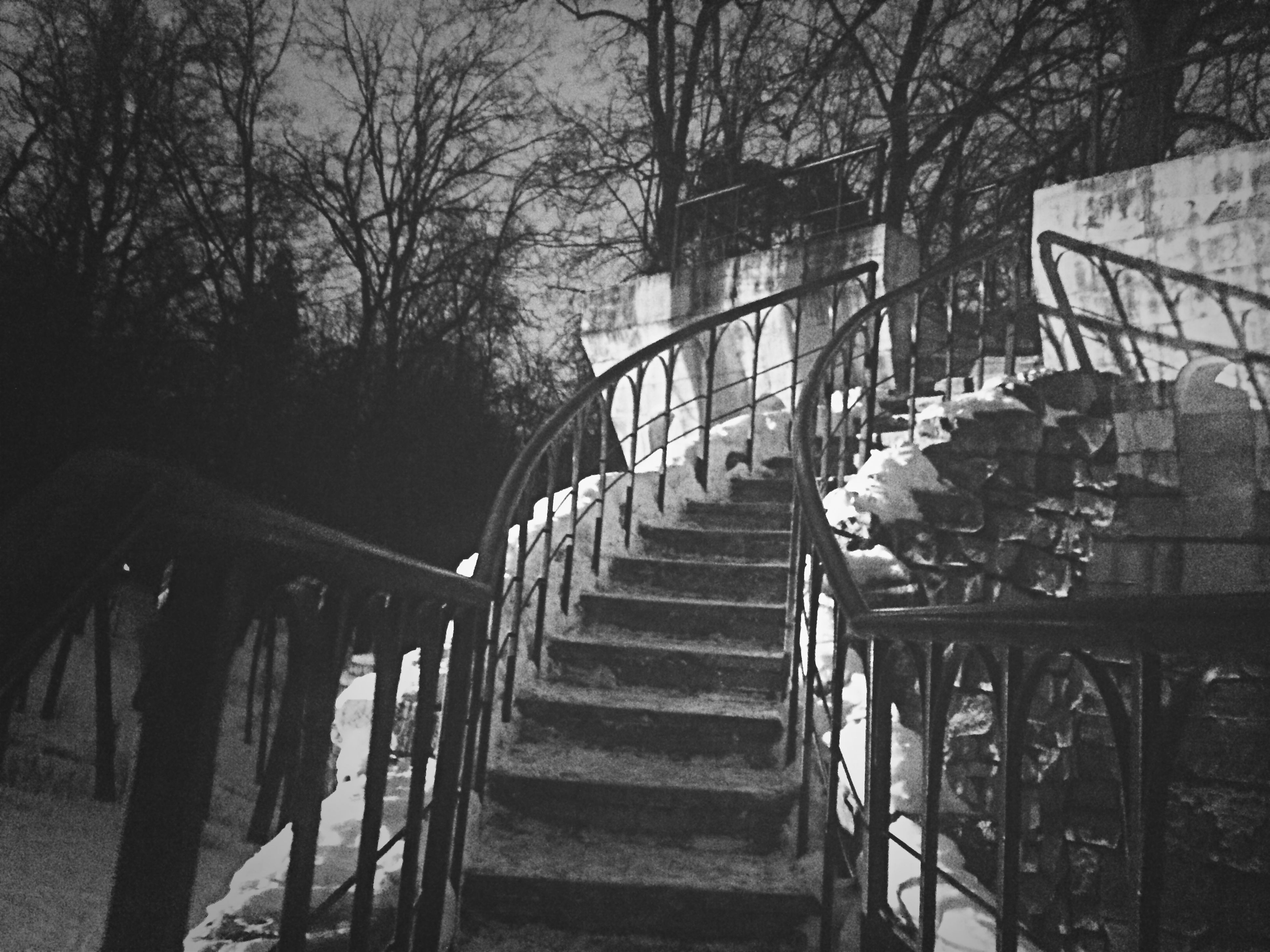 railing, steps, steps and staircases, tree, built structure, staircase, architecture, the way forward, footbridge, stairs, no people, building exterior, bridge - man made structure, connection, branch, day, metal, outdoors, nature, sunlight
