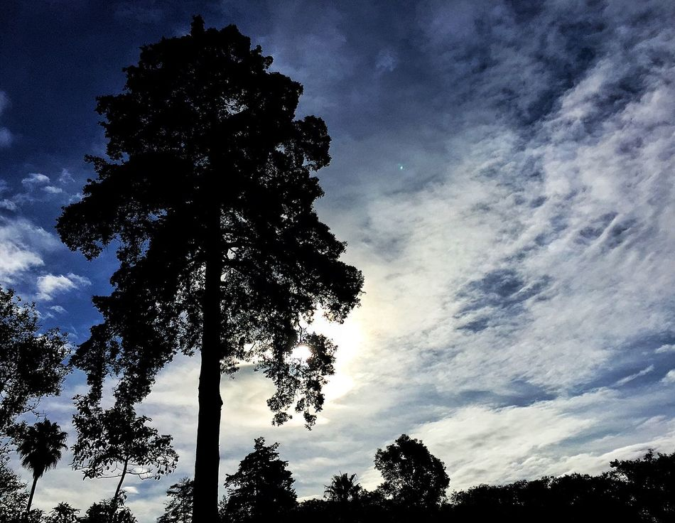 The Great Outdoors - 2015 EyeEm Awards Check This Out Taking Photos Exhacienda De Chautla Sky Skyporn Sky_collection Clouds And Sky Trees Tree