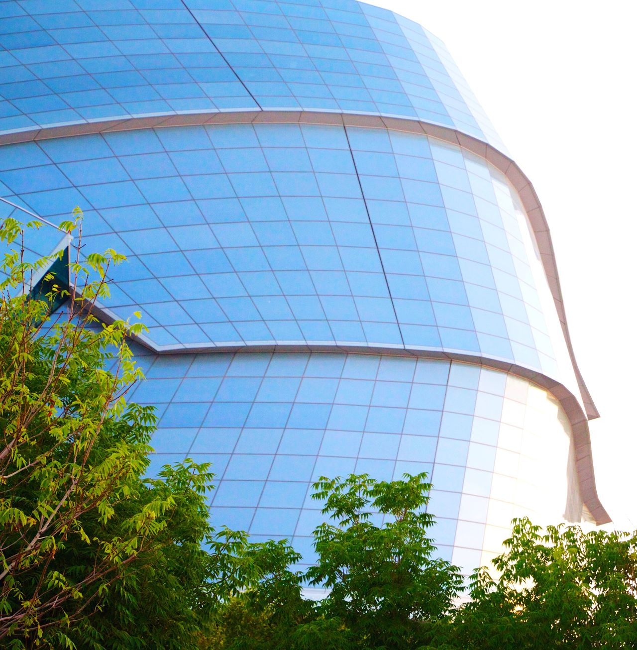 Modern Urban Scene Urban Reflections Glass Building Architecture Low Angle View Modern Blue Sky Building Exterior Built Structure Tree City Outdoors Clear Sky Day No People Futuristic Skyscraper