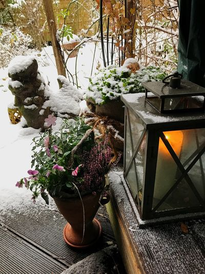 2.Advent Advent Close-up Beauty In Nature No People Freshness Day Nature Wood - Material Table Flower Winter Snow Outdoors Decoration Scenics Candle Lantern Shades Of Winter