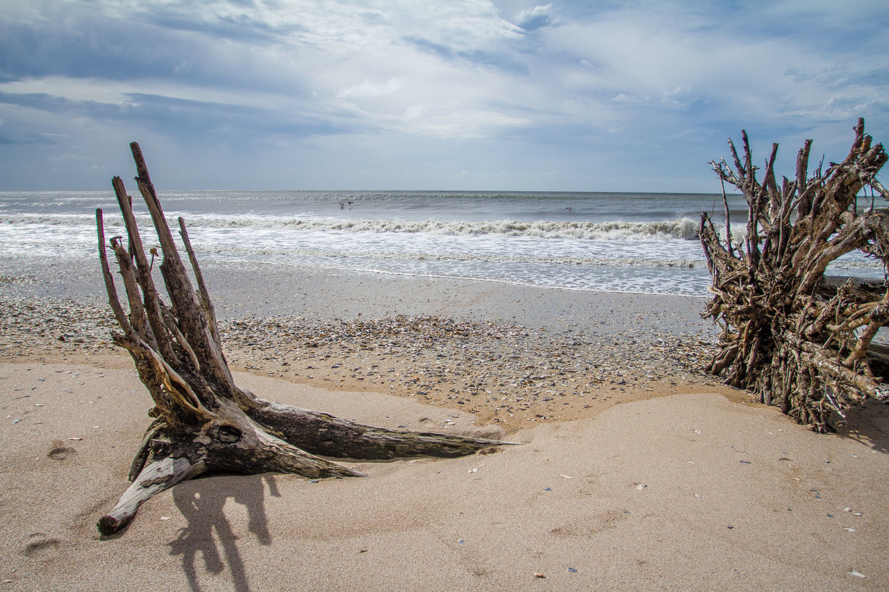 Driftwood Nature Ocean Outdoors Sand Sea Shore Sky Tree