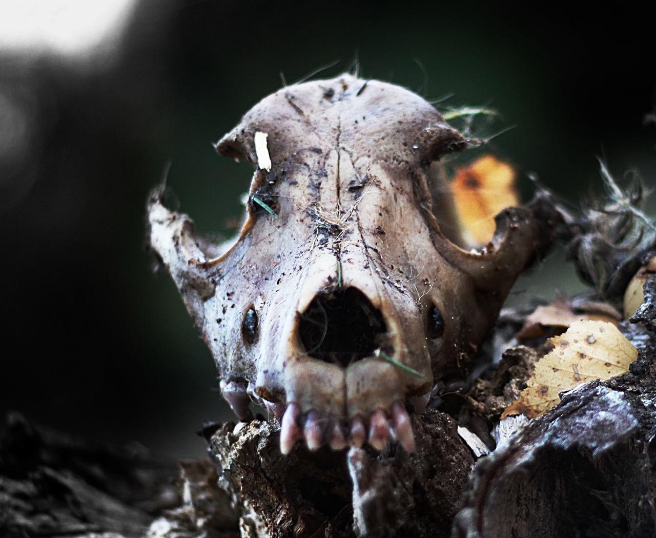 666 Dark Death Devil Dog, Forest Human,' Scull
