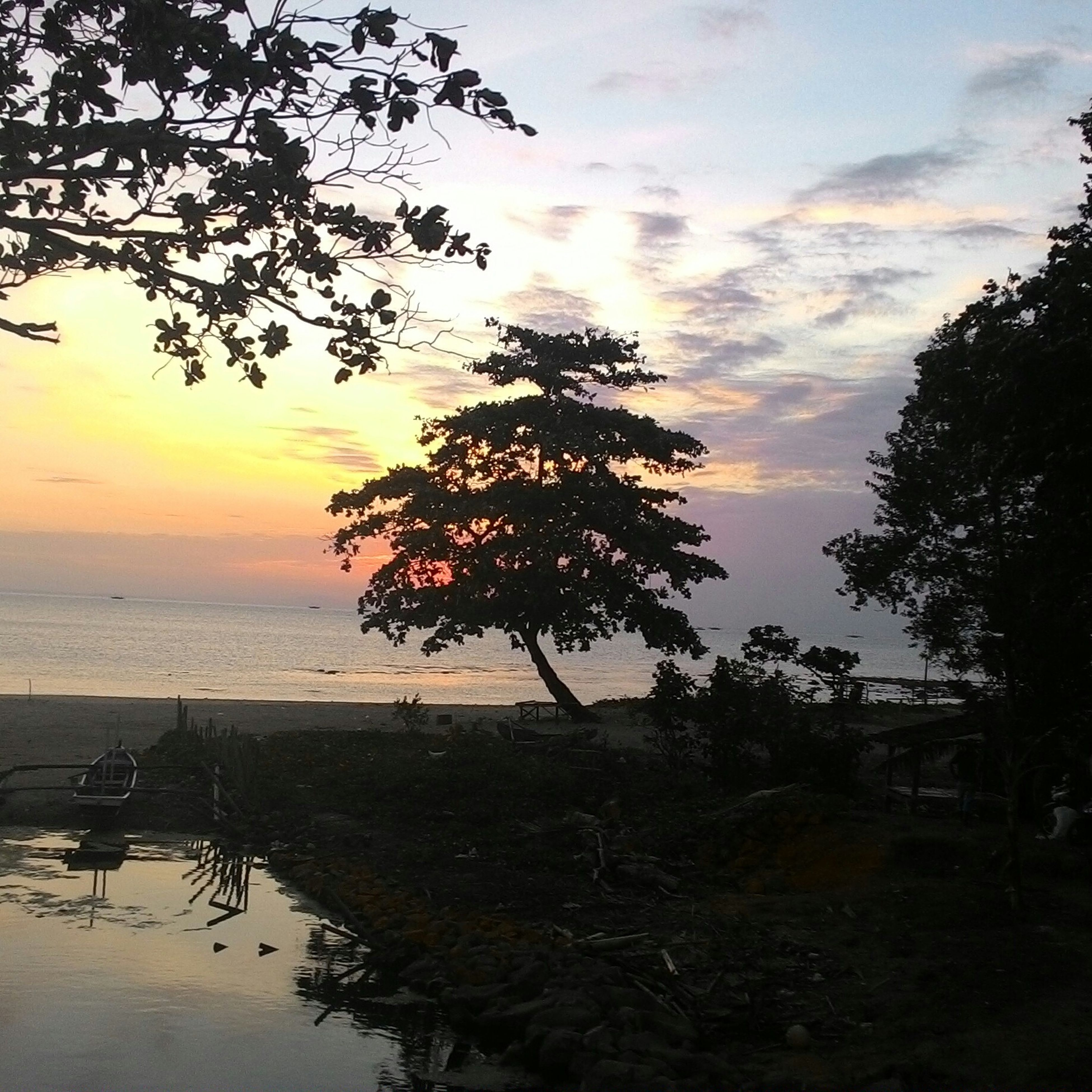 tree, sunset, sky, tranquility, tranquil scene, scenics, silhouette, water, beauty in nature, sea, nature, horizon over water, branch, cloud - sky, idyllic, beach, growth, tree trunk, shore, dusk