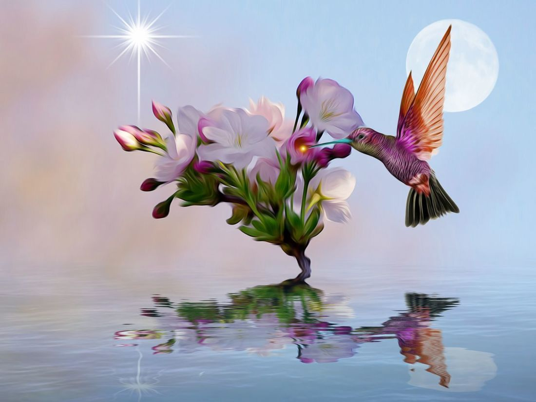 Flower Reflection Water Pink Color Beauty In Nature Nature Tranquility Artistic Expression Edit Junki Multi Colored Hummingbird Edit Cut And Paste