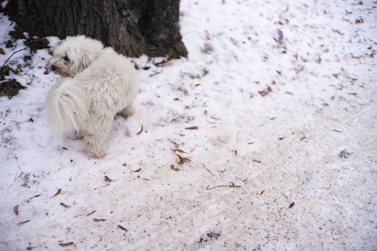 White on White Animal Themes Animals In The Wild Beauty In Nature Cold Temperature Day Dog Field Mammal Munich Nature No People One Animal Outdoors Snow Snow ❄ White Winter