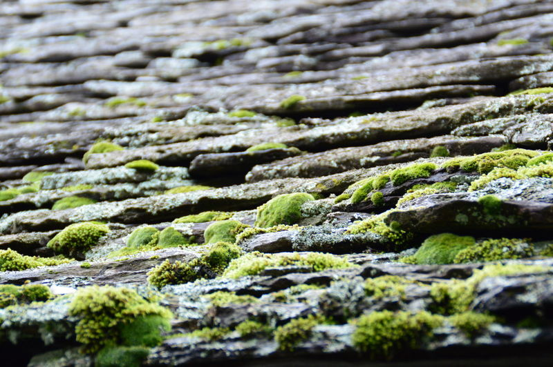Nordbound... Backgrounds Cobblestone Collection Full Frame Green Color Landscape Moss Outdoors Rock Selective Focus Stone Textured  Colors And Patterns