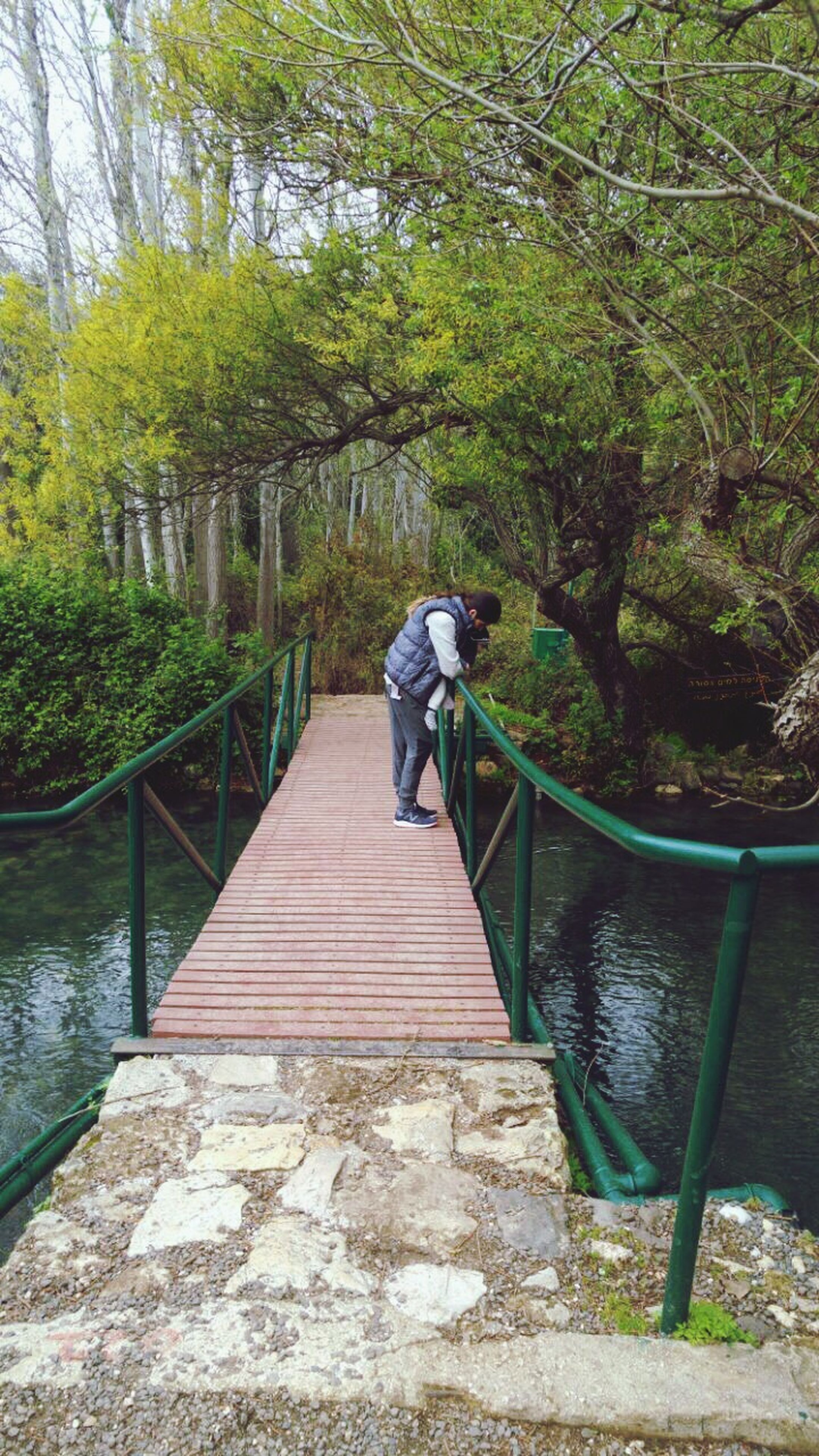 full length, rear view, tree, one person, real people, lifestyles, railing, steps, day, leisure activity, men, outdoors, the way forward, nature, steps and staircases