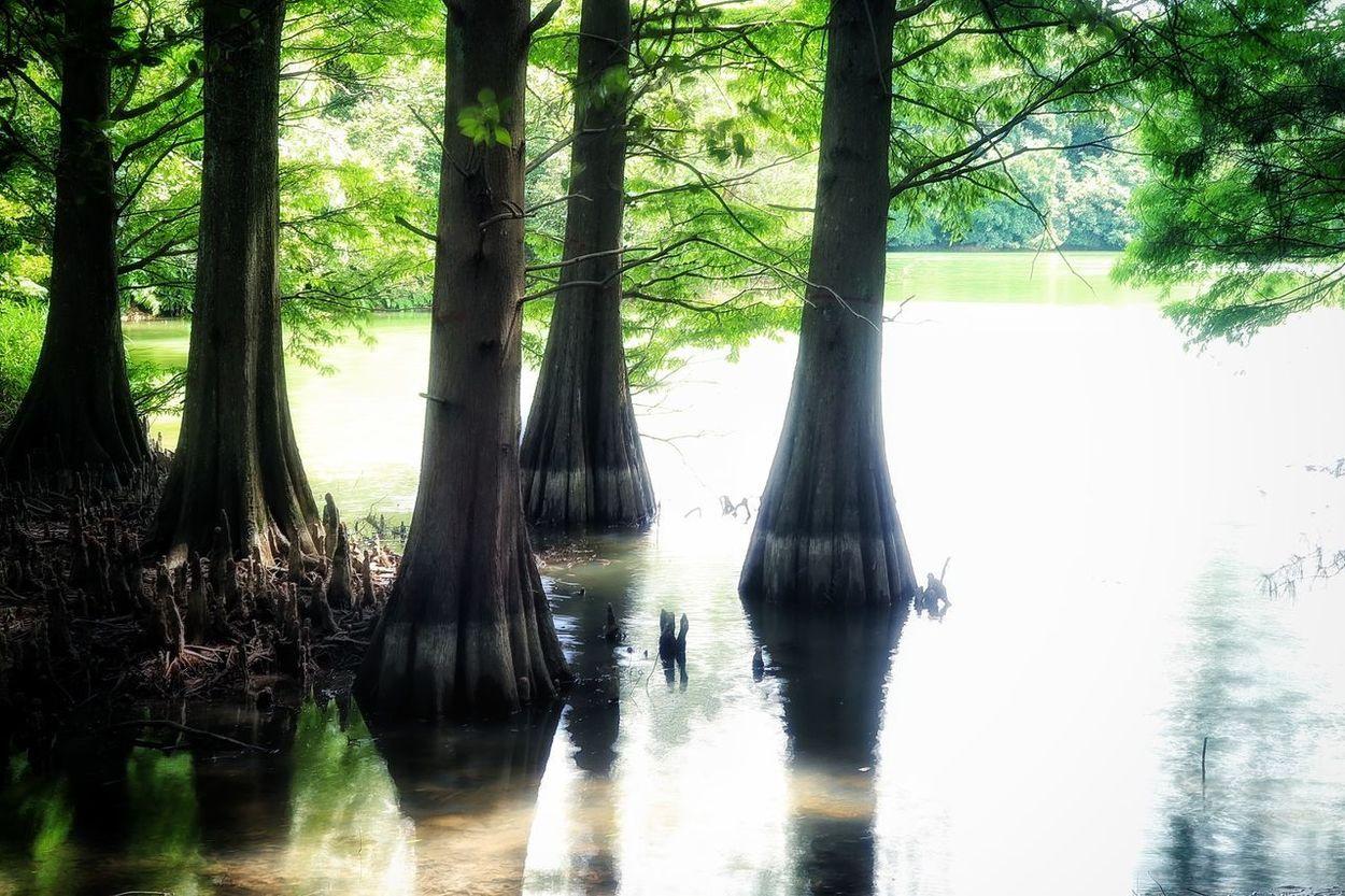 森林浴 ハイキング マイナスイオン 福岡 篠栗 篠栗九大の森 九大の森 ラクウショウ 雨あがり Cloudy Sky Dramatic Sky EyeEm Nature Lover EyeEm Best Shots Beauty In Nature Cloud - Sky EyeEm Gallery Nature Reflection Water Tree Nature Lake Beauty In Nature Pond View Lake View