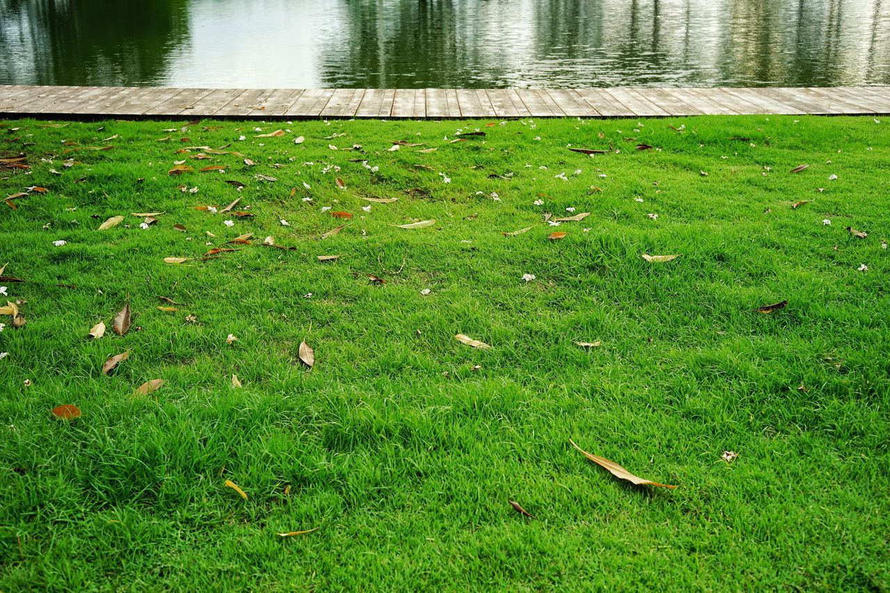 grass, green color, nature, day, water, outdoors, high angle view, no people, lake, leaf, growth, tranquility, beauty in nature