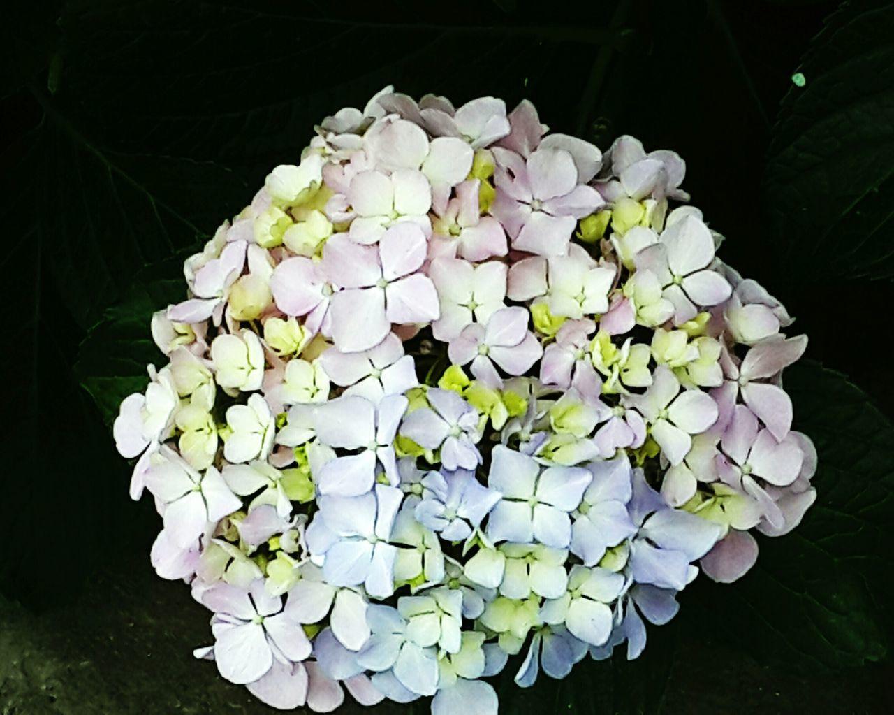 Flowers Flowers Bouquet Simbol Of Love Er.KK.Chopra