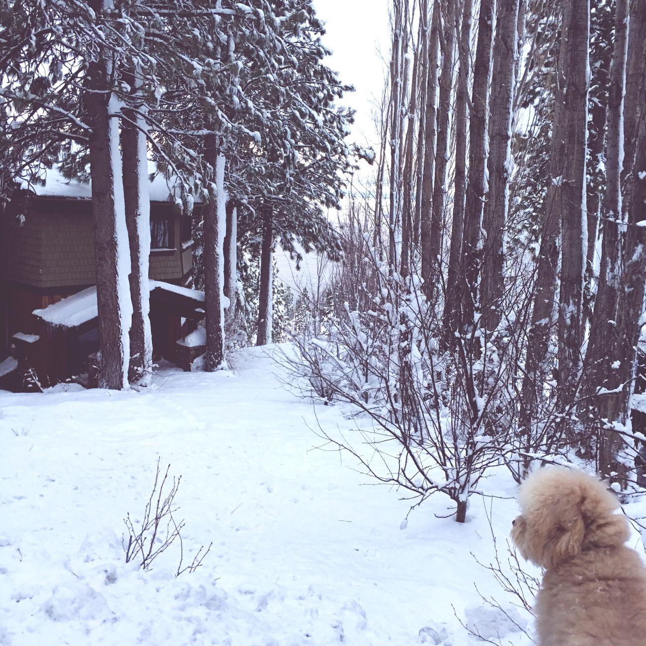 Lake Tahoe Snow winter First Eyeem Photo