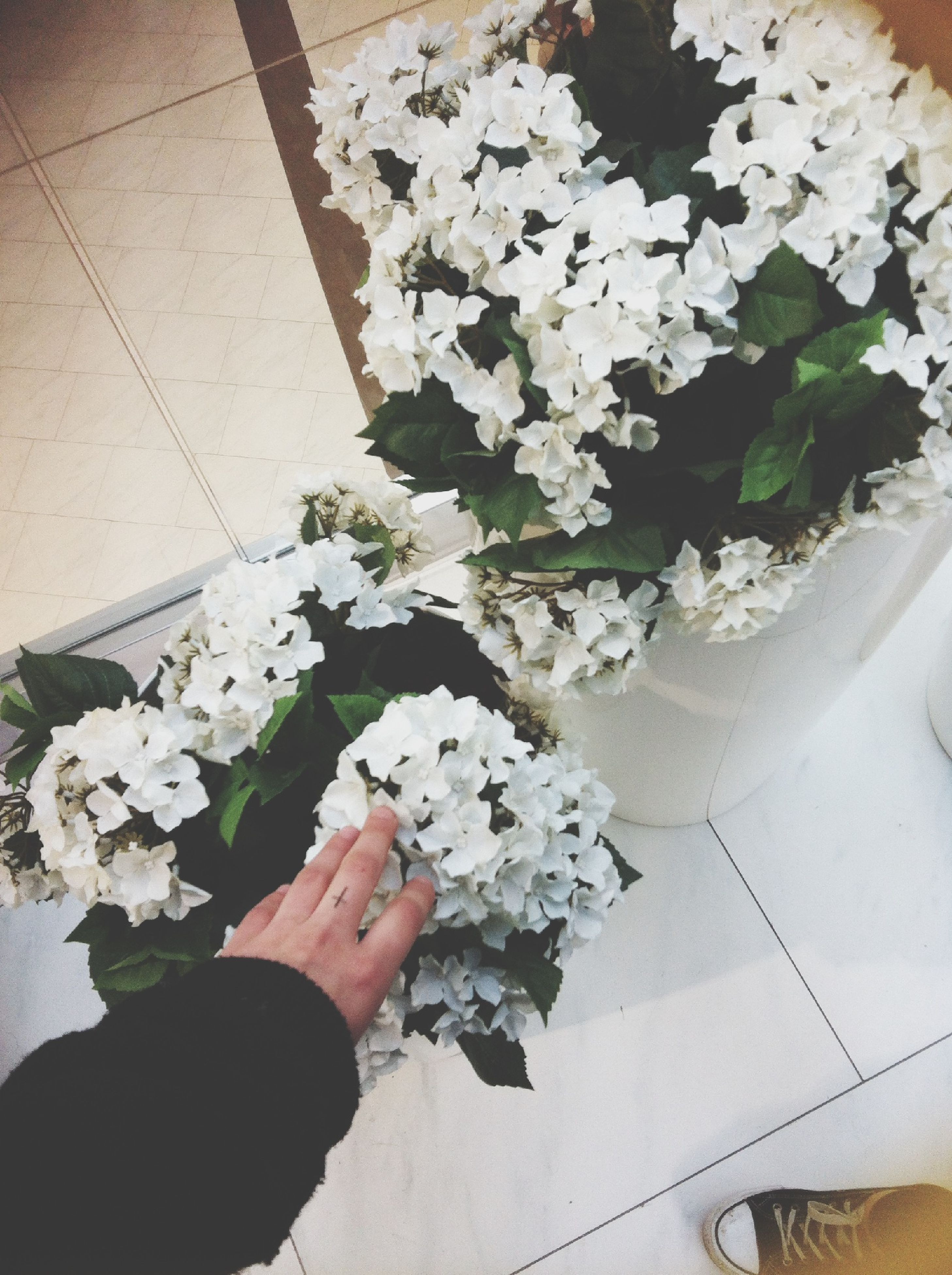 flower, high angle view, indoors, freshness, person, personal perspective, petal, white color, low section, fragility, plant, potted plant, part of, leaf, vase