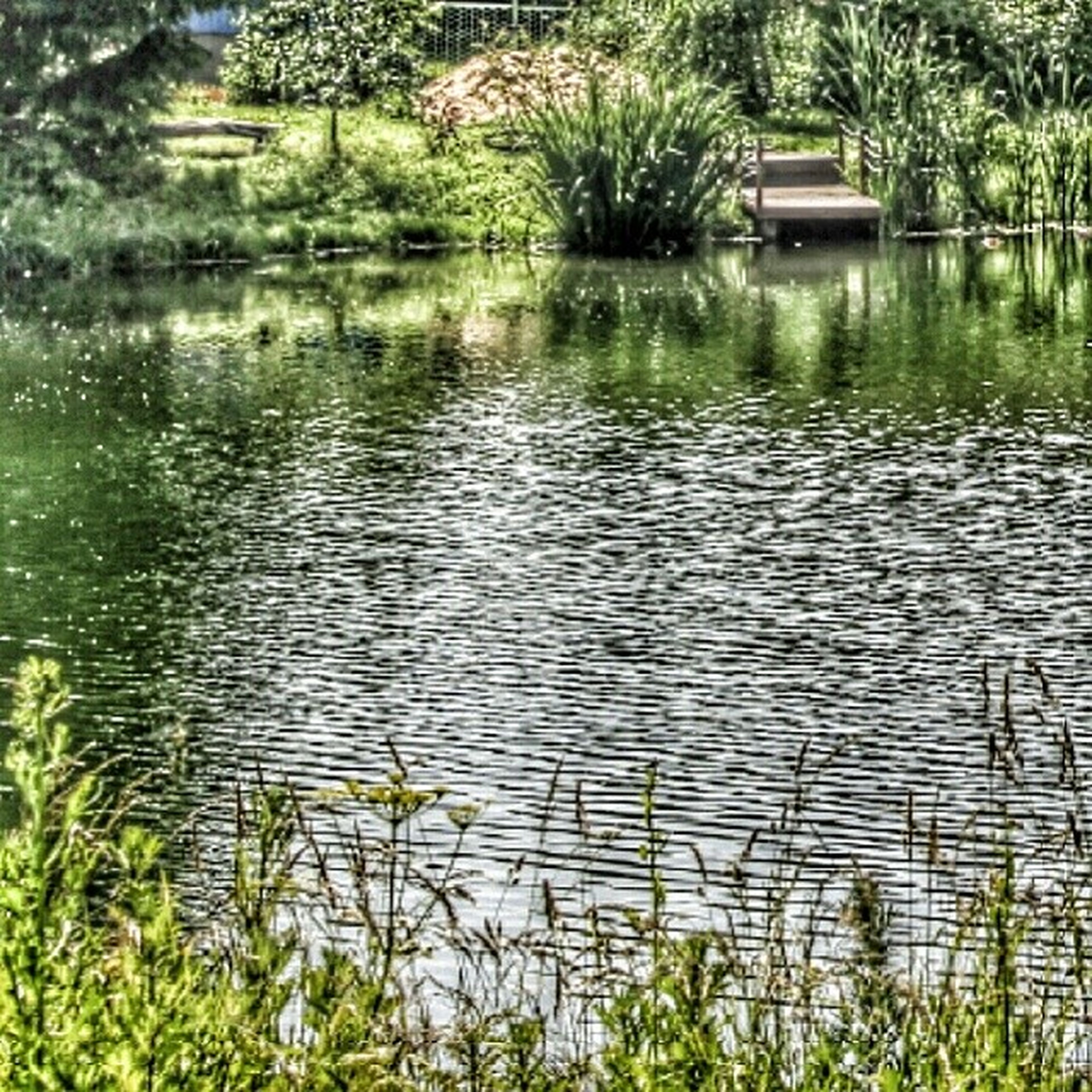 water, tree, growth, lake, plant, reflection, tranquility, nature, green color, beauty in nature, tranquil scene, river, grass, rippled, scenics, branch, outdoors, no people, waterfront, day