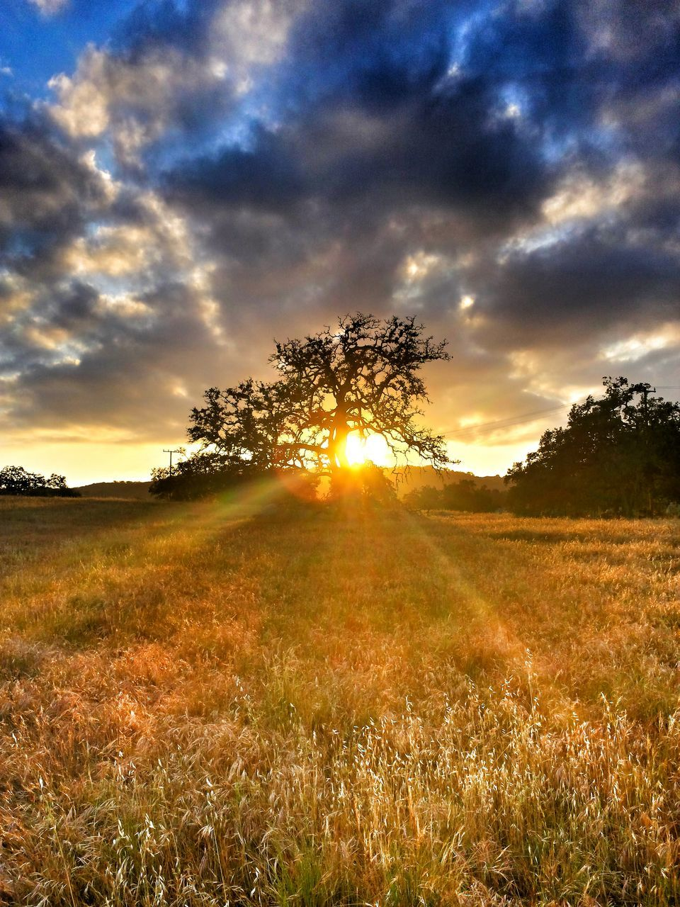 sunset, sunbeam, sun, field, nature, tranquil scene, grass, tree, sky, beauty in nature, tranquility, scenics, sunlight, landscape, majestic, outdoors, cloud - sky, no people, growth, day
