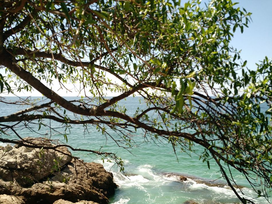 Nature Tree Water Beauty In Nature Tranquility Outdoors Growth Scenics Sea No People Sky Branch Day Beauty In Nature Puerto Vallarta Mexican Sunsets Travel Destinations Mexico Puertovallarta Palm Tree Clear Sky Tranquility Cloud - Sky Tranquil Scene