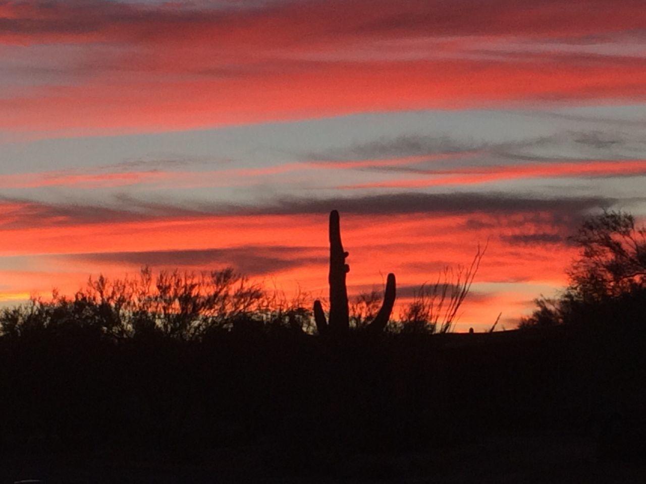 Desert Sunrise Nature Tranquility Silhouette No People Cactus Sunrise Dramatic Sky Orange Color Majestic Non Urban Scene