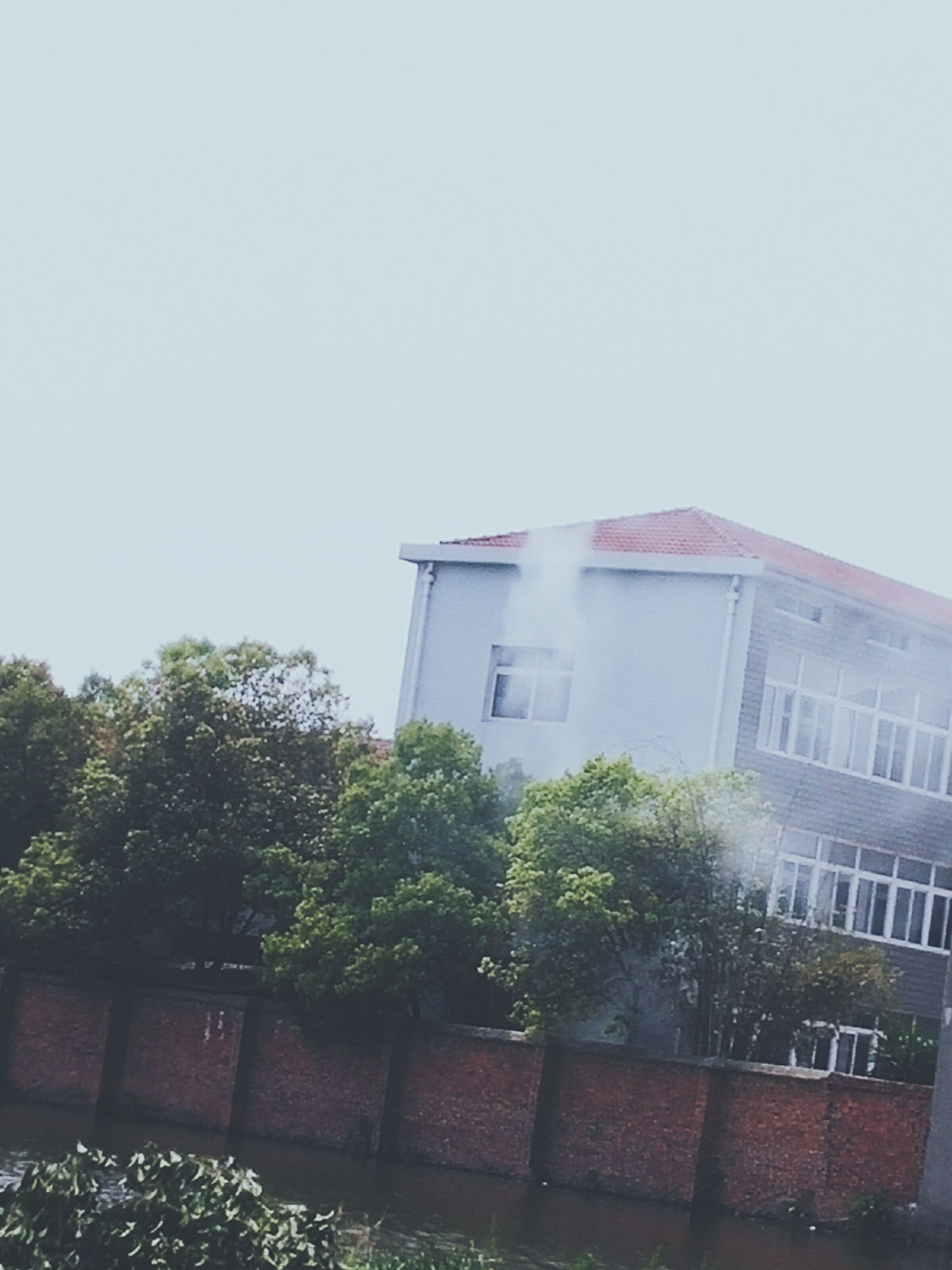 building exterior, architecture, built structure, window, tree, low angle view, clear sky, house, residential structure, building, residential building, growth, copy space, day, glass - material, outdoors, sky, no people, plant, green color
