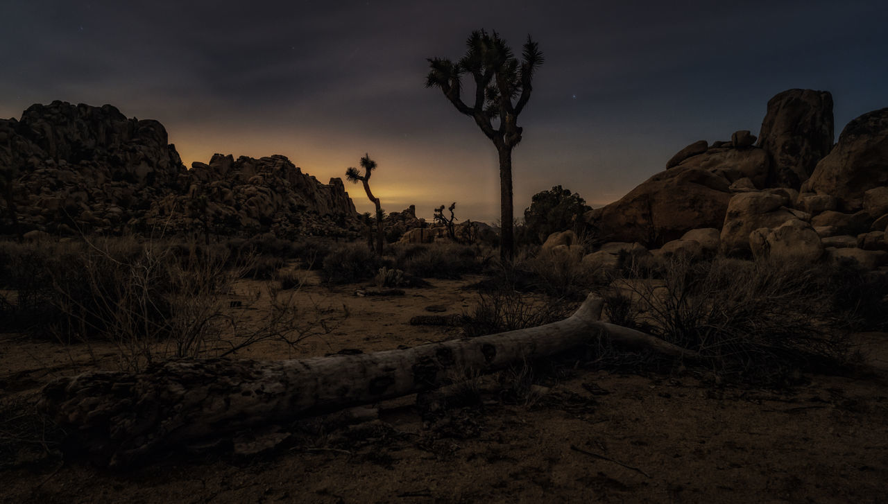 Low light capture inside the Joshua tree national park, low angle showing dead tree and joshua tree California Dead Tree Joshua Tree Joshua Tree National Park Landscape Nature Night Night Photography No People Outdoors Rock - Object Sand Tree
