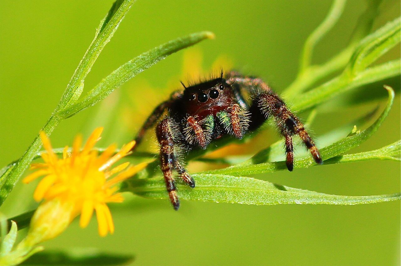Beautiful stock photos of spinnen,  Animal Themes,  Animals In The Wild,  Beauty In Nature,  Close-Up