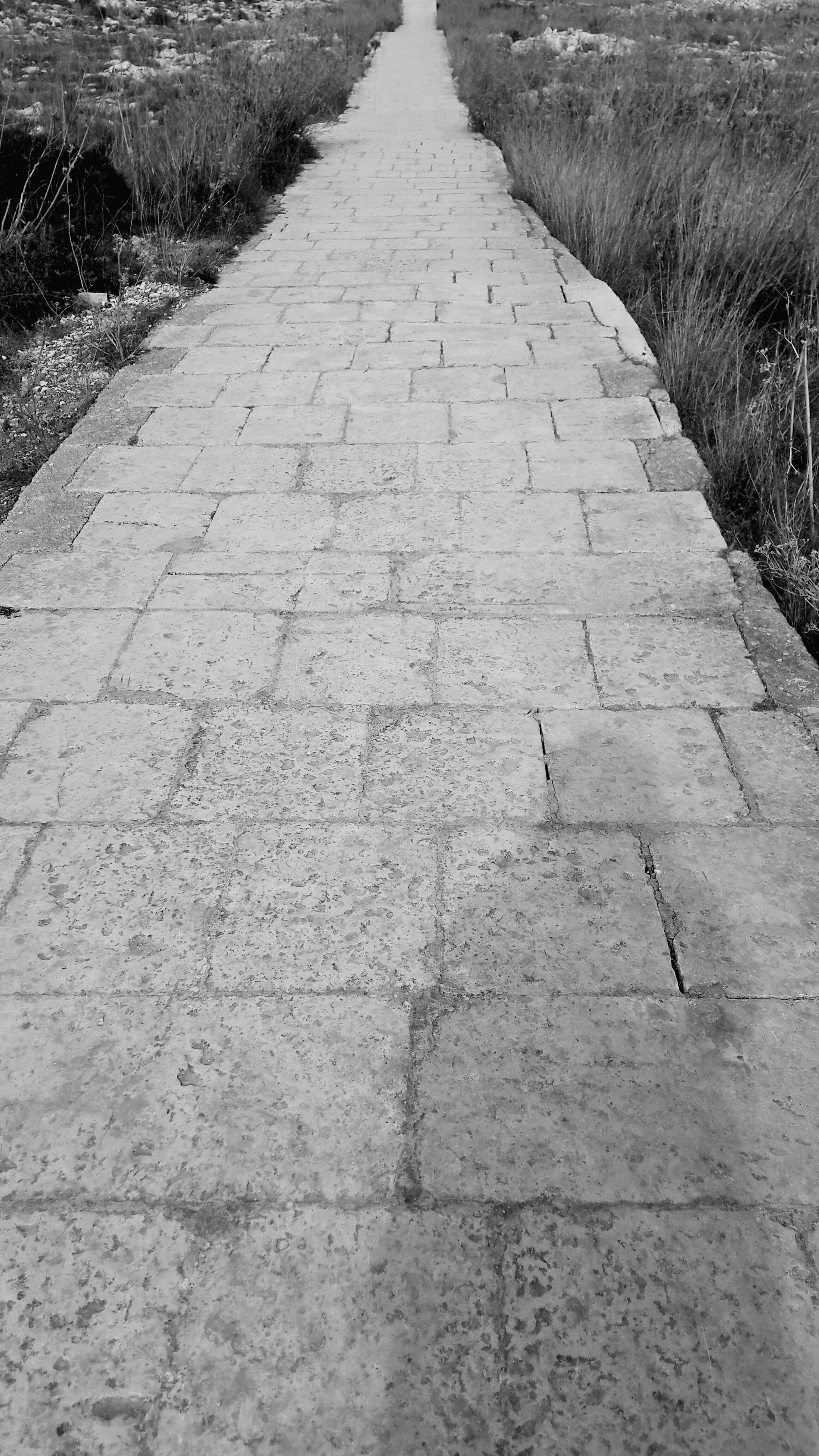 the way forward, day, outdoors, stone tile, walkway, nature, no people