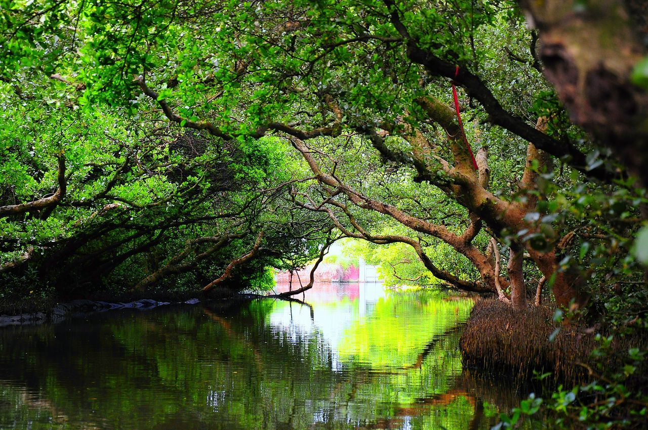 tree, nature, beauty in nature, reflection, lake, growth, tranquility, scenics, tranquil scene, water, branch, idyllic, outdoors, day, no people, forest