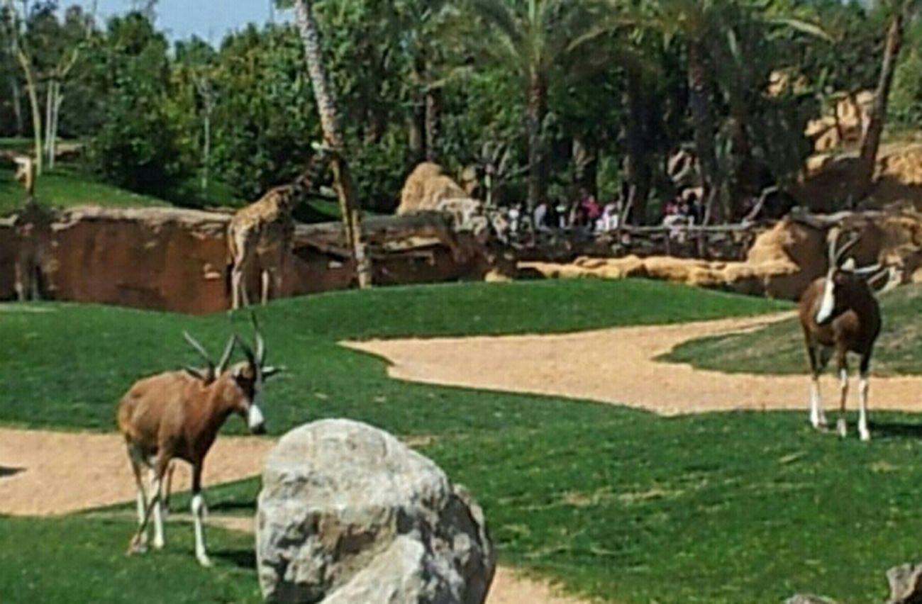 Parque Animales