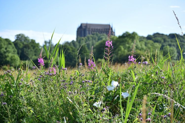View of Lancing College Flower Nature Field Summer Grass Sky Wildlife Photography Outdoors Lancing  Shoreham Lancing College South Downs