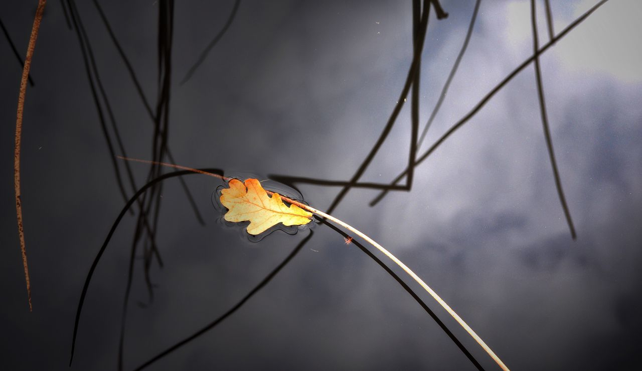 leaf, dry, autumn, outdoors, fragility, day, change, focus on foreground, nature, close-up, no people, beauty in nature, dried plant, water, branch, flower, sky