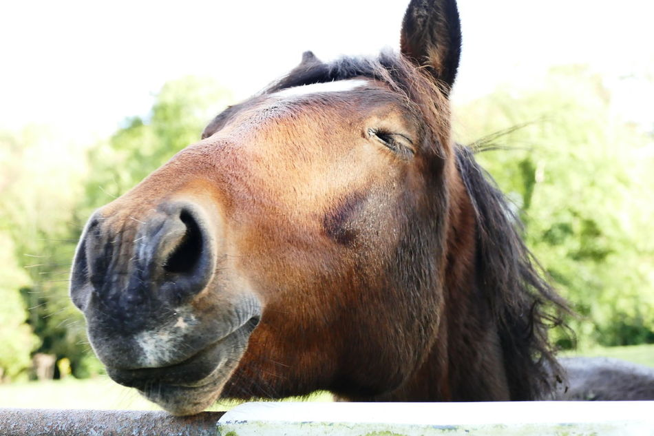 Animal Body Part Animal Head  Animal Themes Brown Close-up Day Domestic Animals Horse Livestock Mammal Nature No People One Animal Outdoors Sky Smiling Eye Smiling Horse Snout