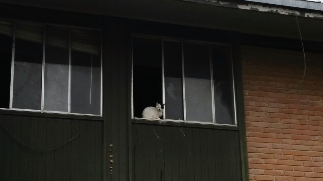 one animal, animal themes, pets, domestic animals, mammal, window, cat, domestic cat, feline, building exterior, no people, architecture, day, outdoors, bird