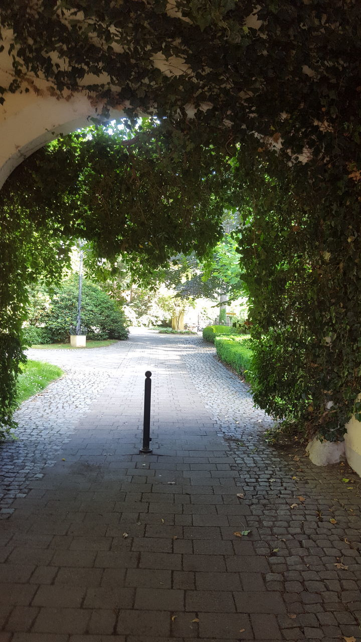 tree, cobblestone, the way forward, footpath, day, outdoors, no people, growth, walkway, nature