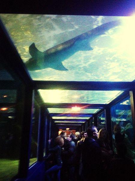 Shark Taking Photos Hollidays
