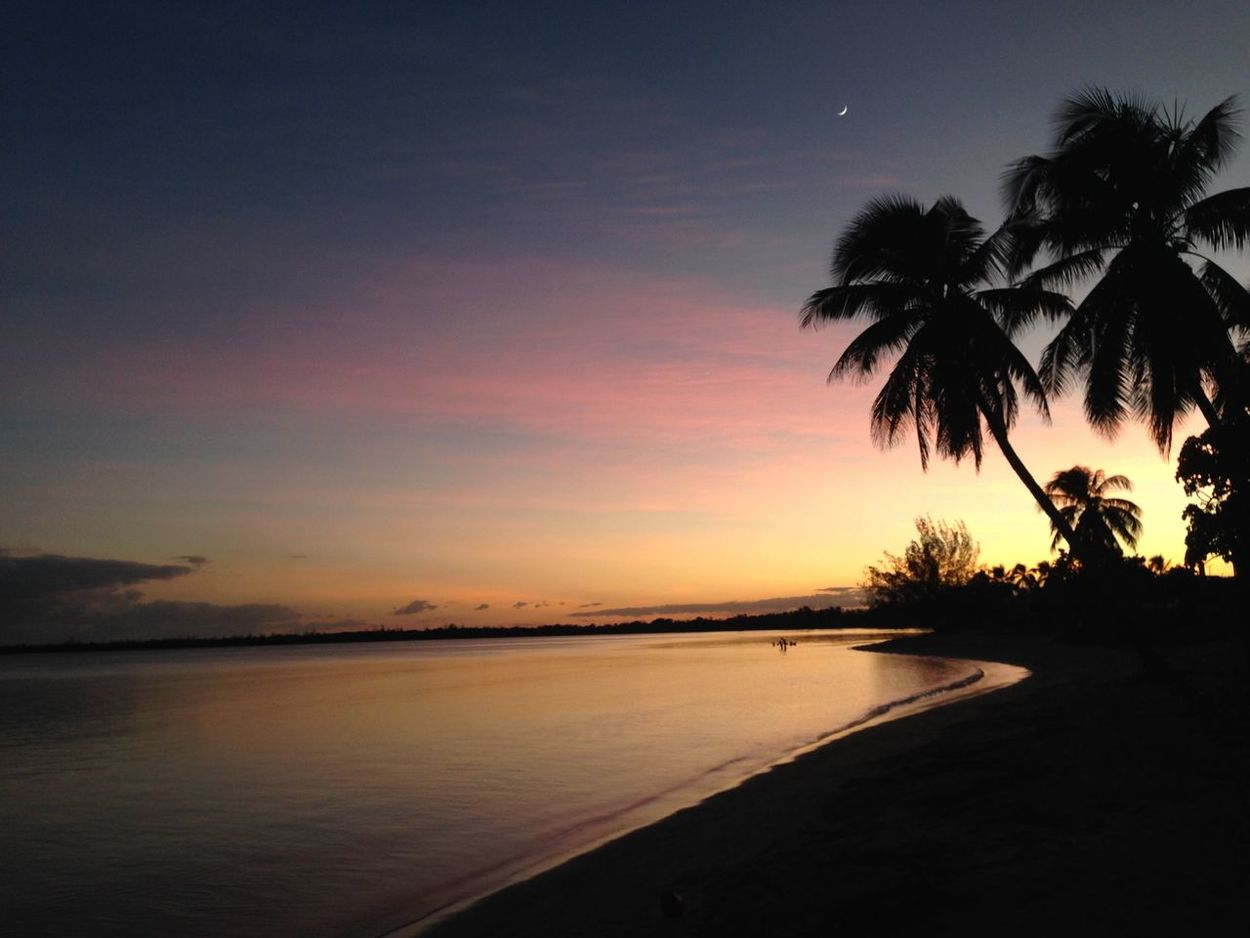 Bay of pigs, Gulf of Cazones, Southern Cuba Aftersunset Beach BeachSunset Beauty In Nature Carribean Cuba Horizon Over Water Nature No People Outdoors Palm Tree Scenics Sea Silhouette Sky Sunset Sunset Over Beach Sunset Over Water Tranquil Scene Tranquility Tree Water